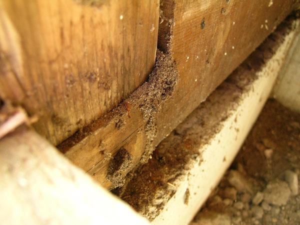白蟻は明るいところが苦手なので、柱や土台の中だけを食べていきます。