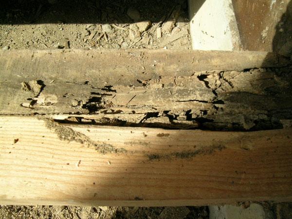 雨漏り箇所から白蟻が発生